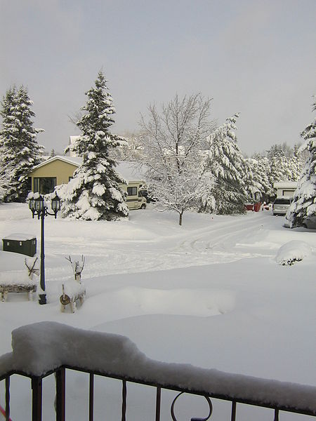 Getting Your Yard Ready for Winter