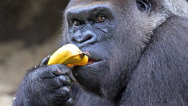 Providing for your Customers: The Gorilla and Banana