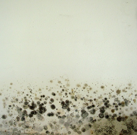 A Small Guide: Prevent Mould in Your Home