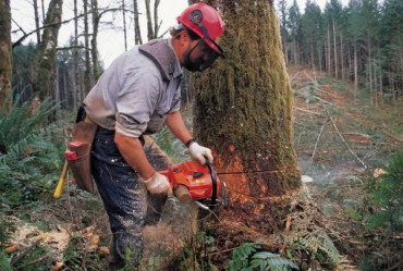 The Role of a Tree Surgeon – Importance