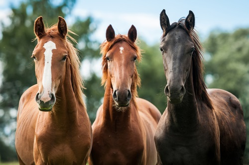 Dos And Don'ts To Consider When You Start A California Horse Business